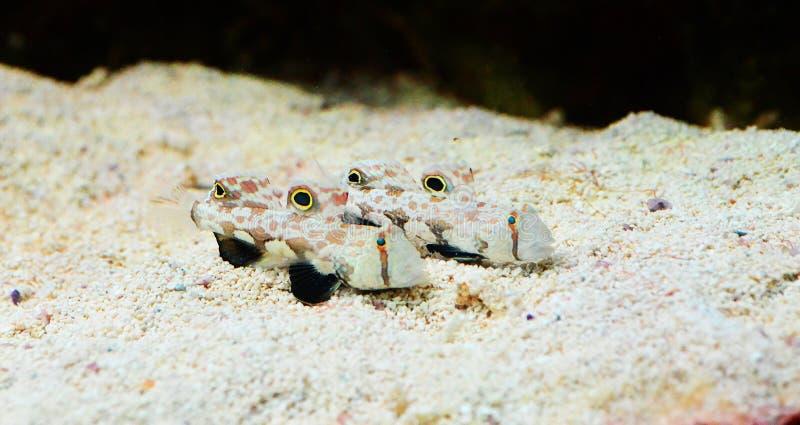 Marine Biology, Fauna, Organism, Fish royalty free stock photo
