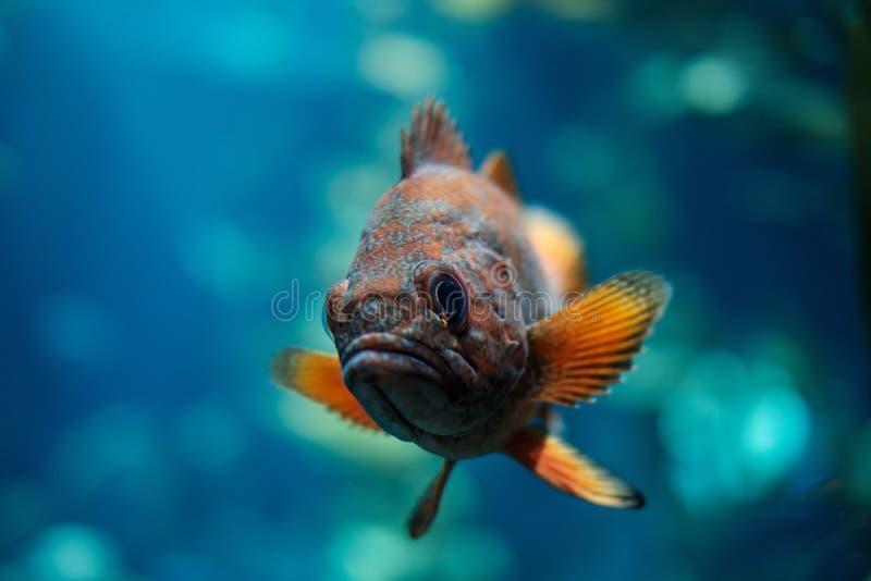 Marine Biology, Fish, Underwater, Organism stock photo