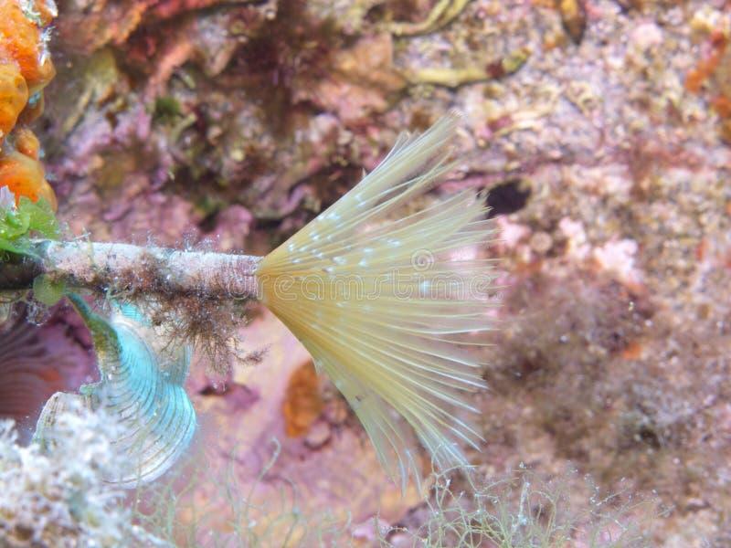 Marine Biology, Underwater, Fauna, Organism stock image