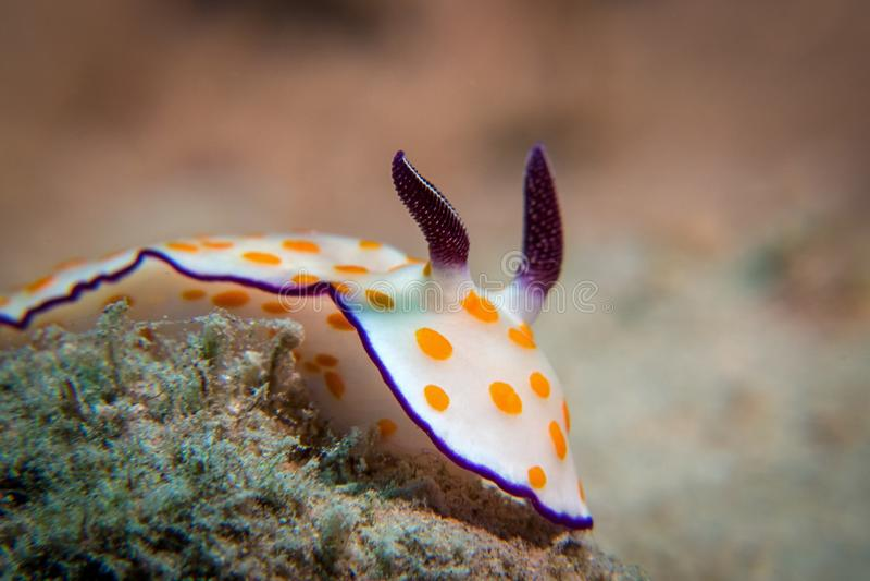 Marine Biology, Underwater, Macro Photography, Close Up Free Public Domain Cc0 Image