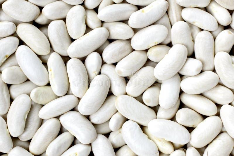Marine, Bohne, weiße Erbse, weiße Niere oder Cannellini-Bohnen textu lizenzfreies stockfoto
