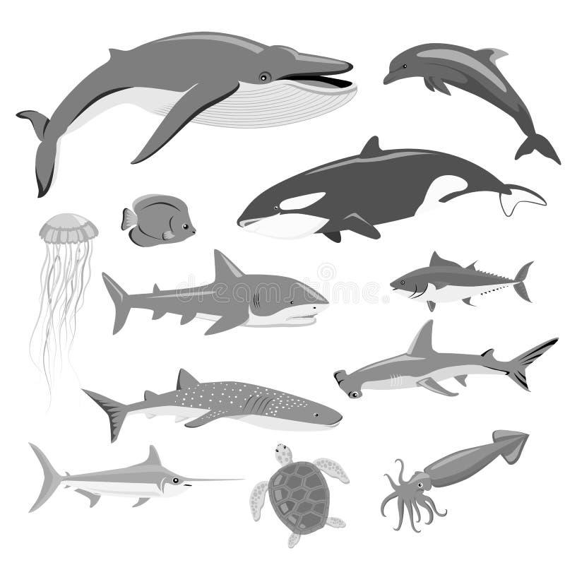 Marine Fauna Set des animaux aquatiques illustration de vecteur