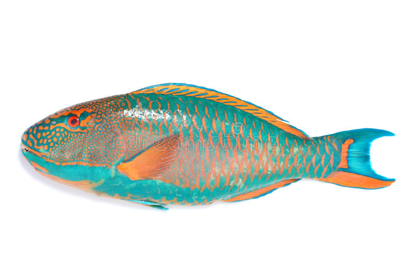 Marine fish stock photos
