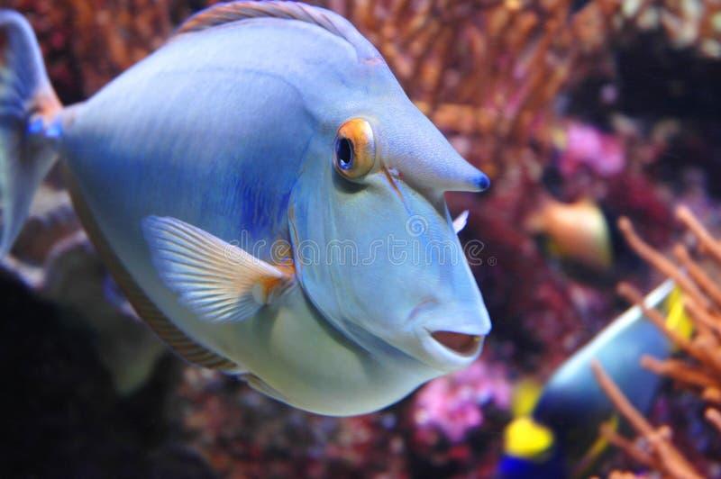 Marine Fish. Closeup of marine fish