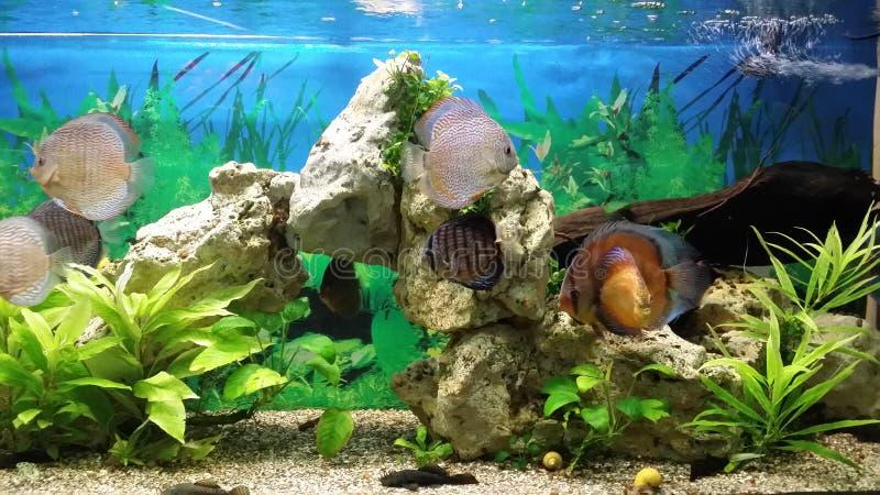 Marine fish in the aquarium. royalty free stock image