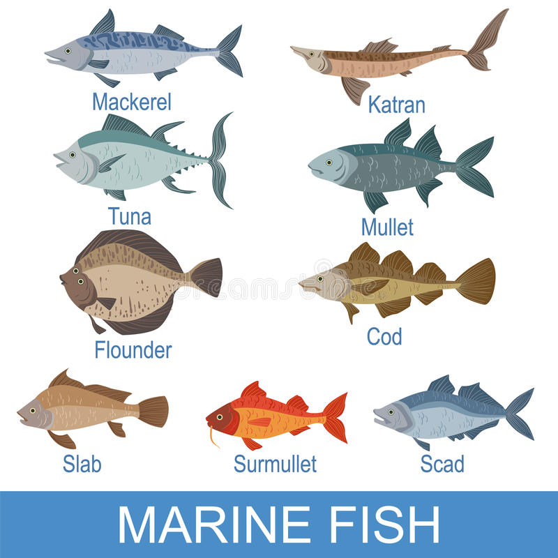 Fish Names Stock Illustrations 236 Fish Names Stock Illustrations Vectors Clipart Dreamstime