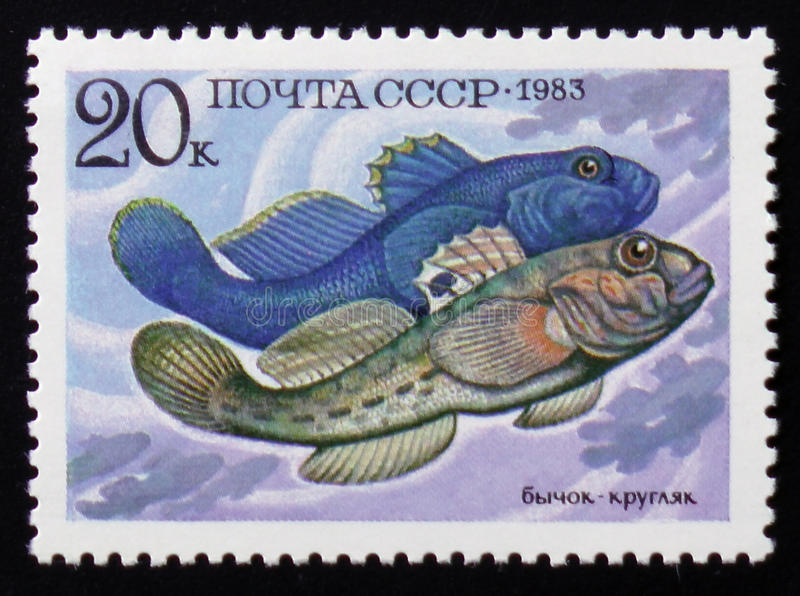 Marine fish, Neogobius melanostomus, circa 1983. MOSCOW, RUSSIA - FEBRUARY 12, 2017: A stamp printed in the USSR shows marine fish, Neogobius melanostomus, from stock photo