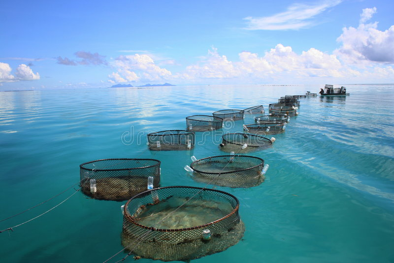 Marine fishery. On tropical sea