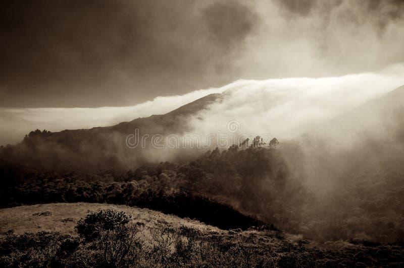 Marine Fog - Marin County stock afbeeldingen