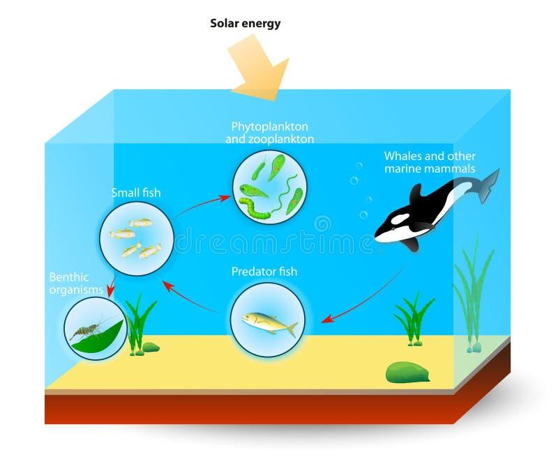 Marine Food Chain o red alimentaria stock de ilustración