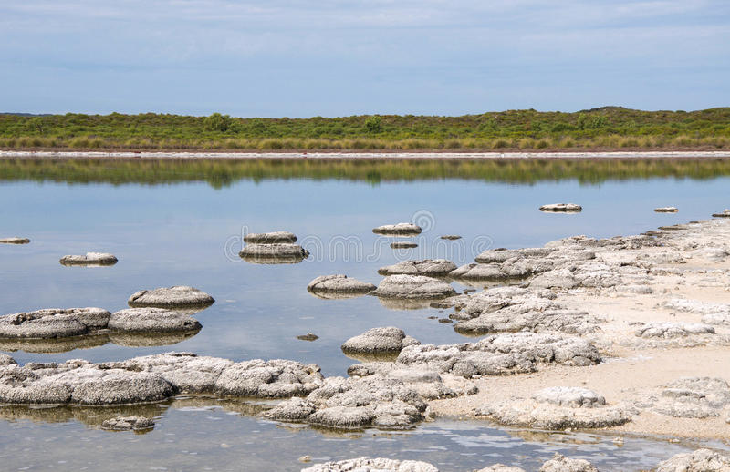 Marine Fossils in Lake Thetis. Rare stromatolites, layered sediment marine fossils, in the Lake Thetis landscape with coastal vegetation under a cloudy sky in stock photos
