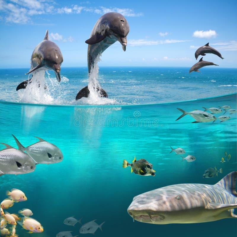 Marine life. Many animals under water in wildlife