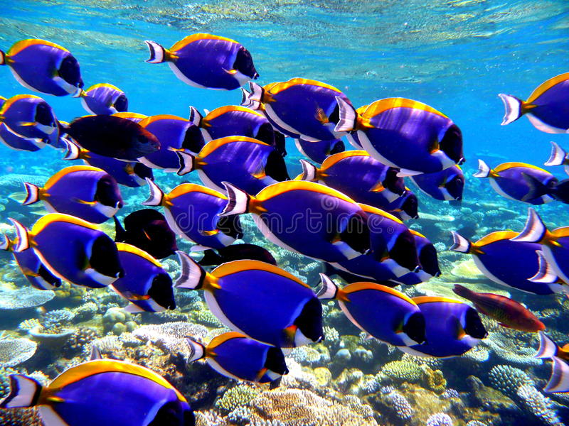 Marine Life lizenzfreies stockfoto
