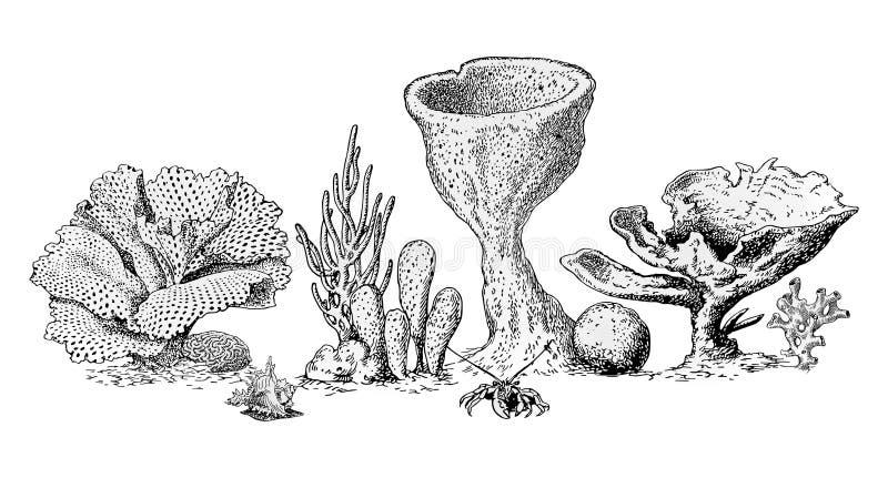 Marine life royalty free illustration