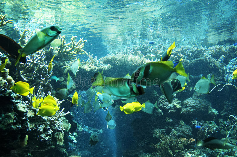 Download Marine life stock photo. Image of water, reef, tropical - 516856