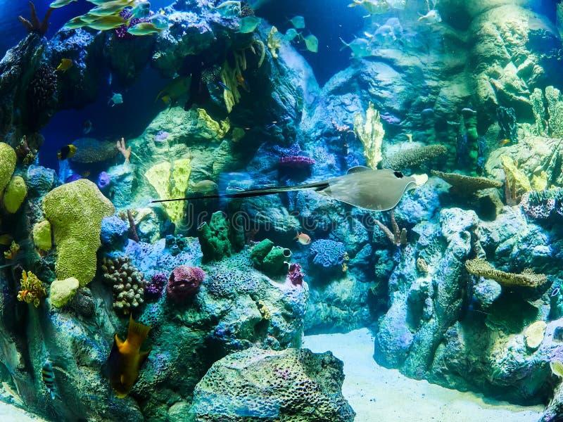 Marine life aquarium in Loro Park Loro Parque, Tenerife, Canary Islands, Spain.  royalty free stock photography