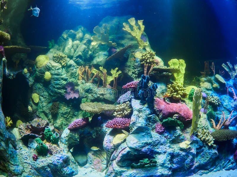 Marine life aquarium in Loro Park Loro Parque, Tenerife, Canary Islands, Spain.  royalty free stock photos