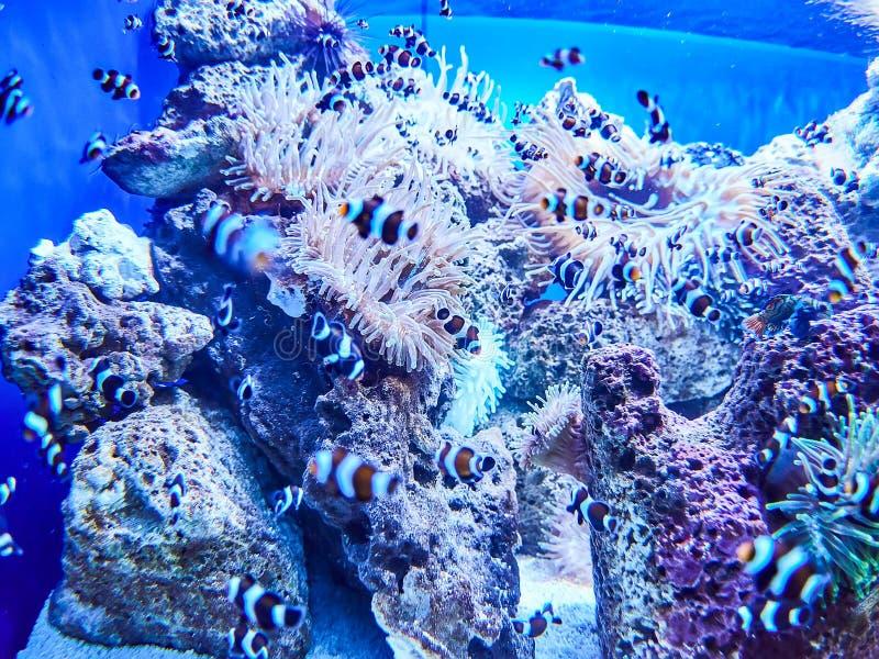 Marine life aquarium in Loro Park Loro Parque, Tenerife, Canary Islands, Spain.  royalty free stock images