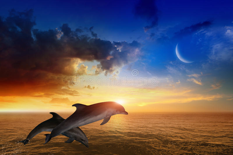 Marine life background - jumping dolphins, glowing sunset stock photos