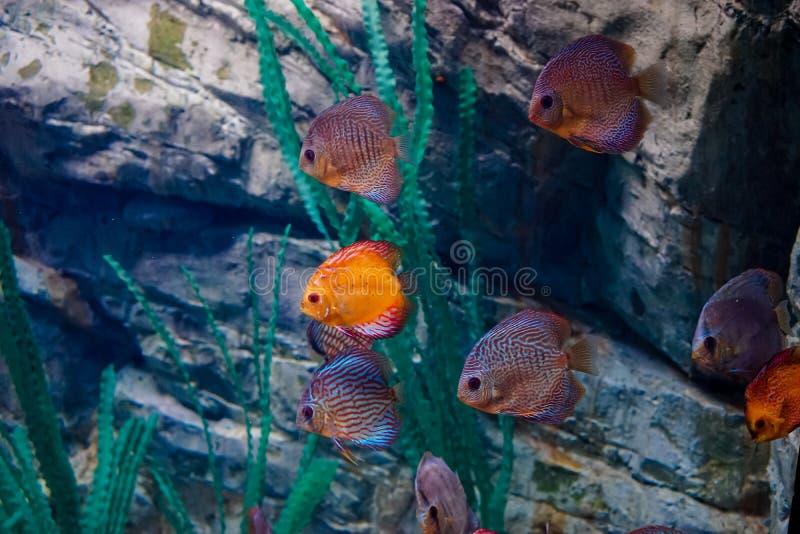Marine Life dans l'aquarium images libres de droits