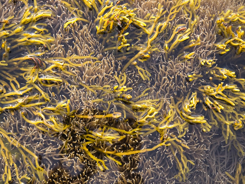 Marine Life Fund With Yellow Algaes Stock Photo