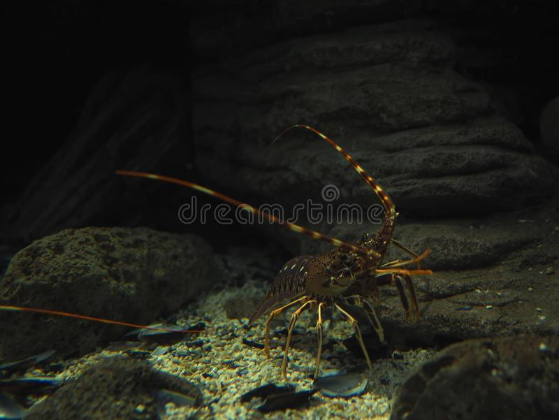Marine Life Of Greece arkivfoton