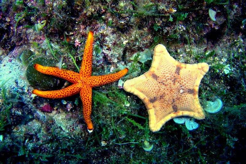 Marine life. In Croatian Vis island Adriatic sea stock photos