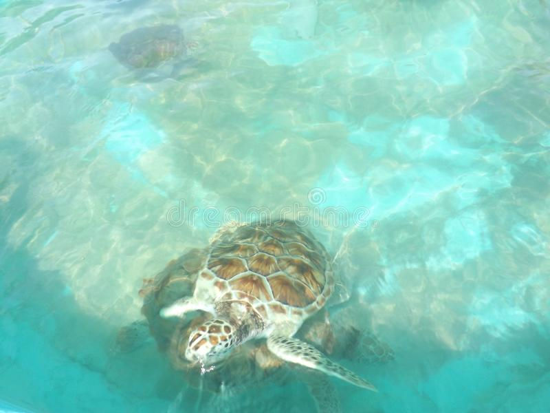 Marine Life Mexico Coral Reef-Schildpad royalty-vrije stock foto's