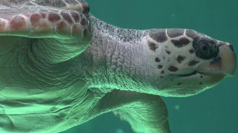 Marine Life And Sea Animals stockfotografie