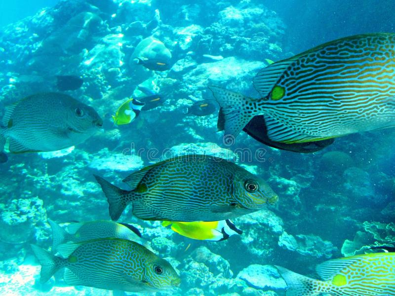 Marine life of tropical Townsville royalty free stock photography