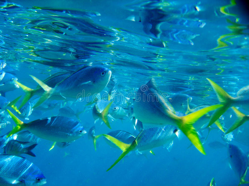 Download Marine Life Under Great Barrier Reef Stock Photo - Image: 15411962
