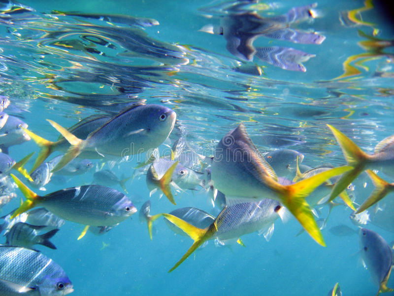 Marine Life under Great Barrier Reef. Australia royalty free stock photos