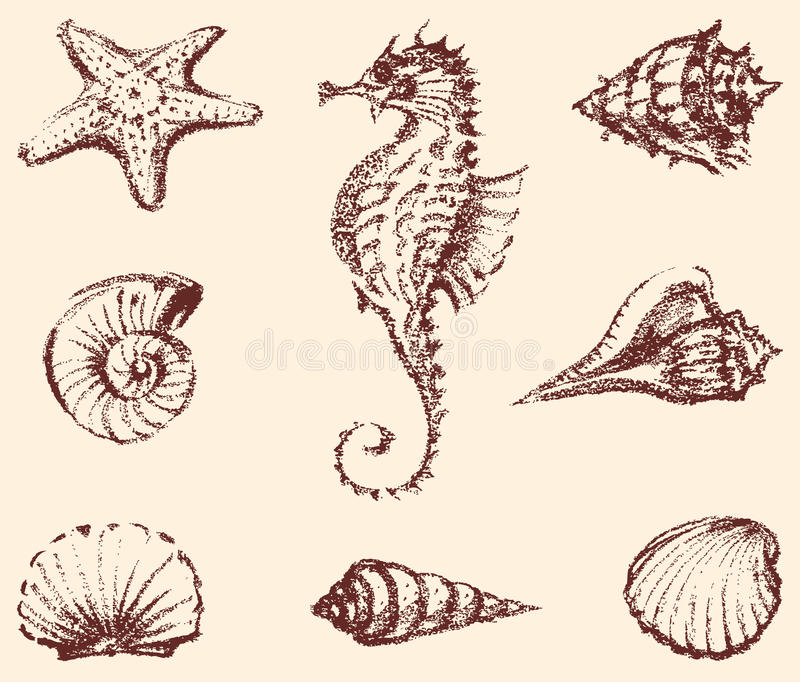 Marine life. Vector drawings of the different sea creatures royalty free illustration