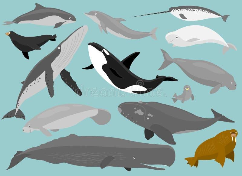 Marine Mammals vector illustration