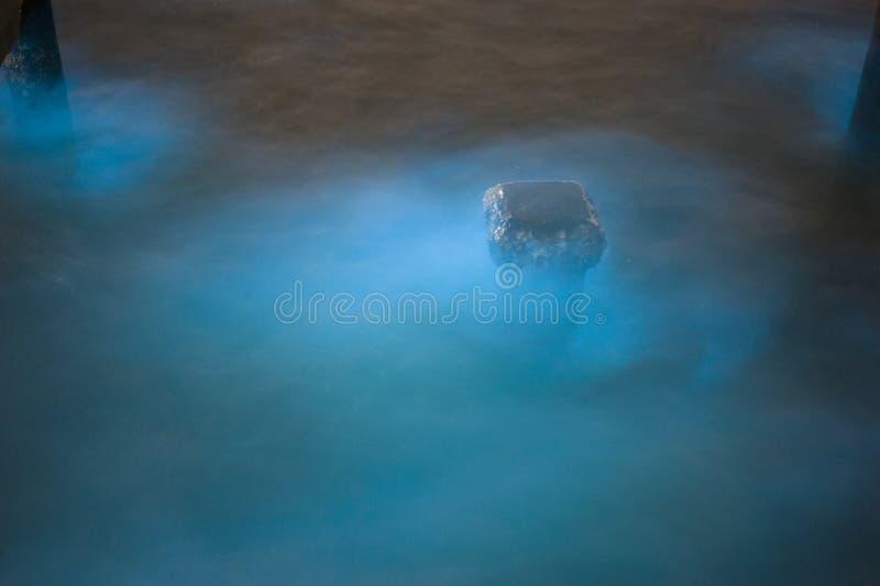 Marine Plankton images stock