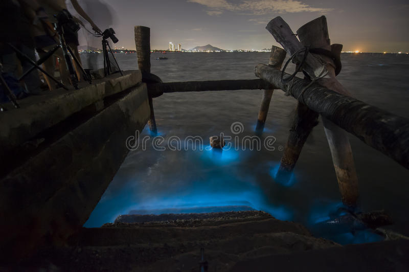 Marine Plankton photo stock