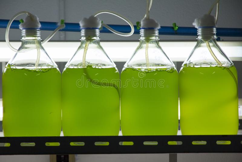 Marine plankton culture in laboratory stock photo