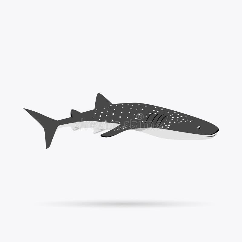 Marine Predator Shark Design Flat ilustração do vetor