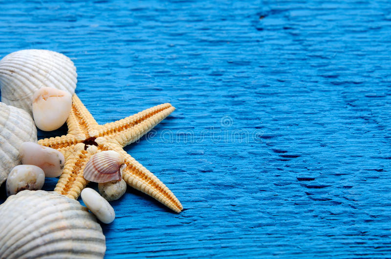 Marine sea background with shells and starfish royalty free stock photo