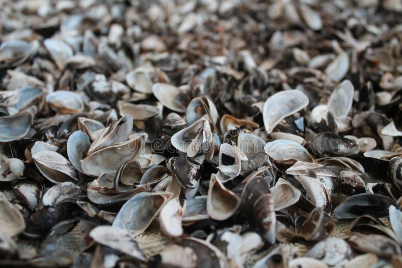 Marine shells. Colorful fragile marine shells on coastline in summer day on beach royalty free stock images