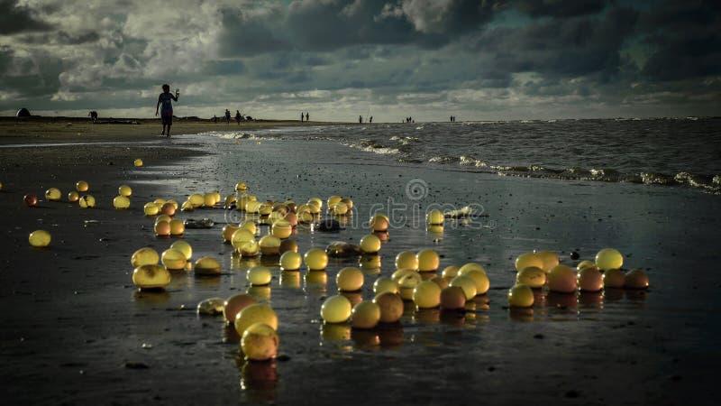 Marine snail stock photo