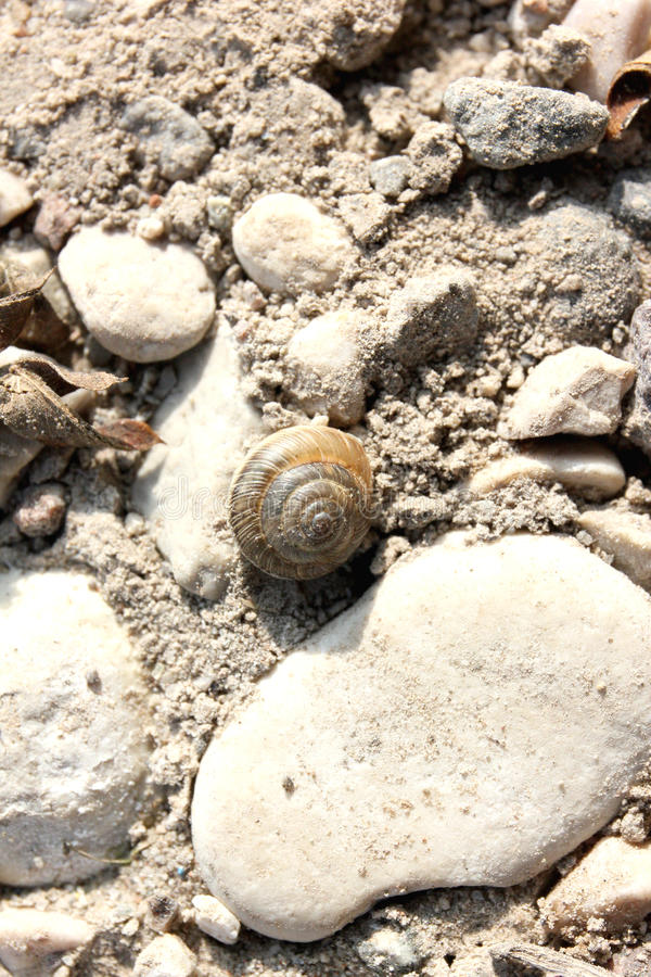Marine snail. Photo image with stones and snail stock images