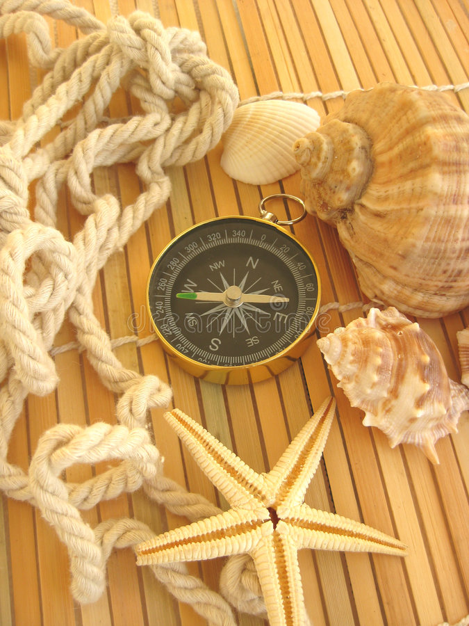Download Marine still life stock photo. Image of marine, seashell - 8150858