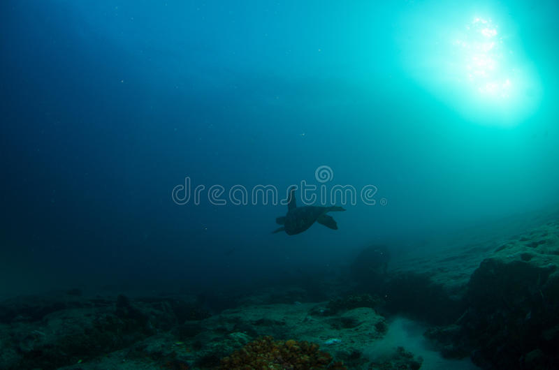 Marine Turtle. image stock