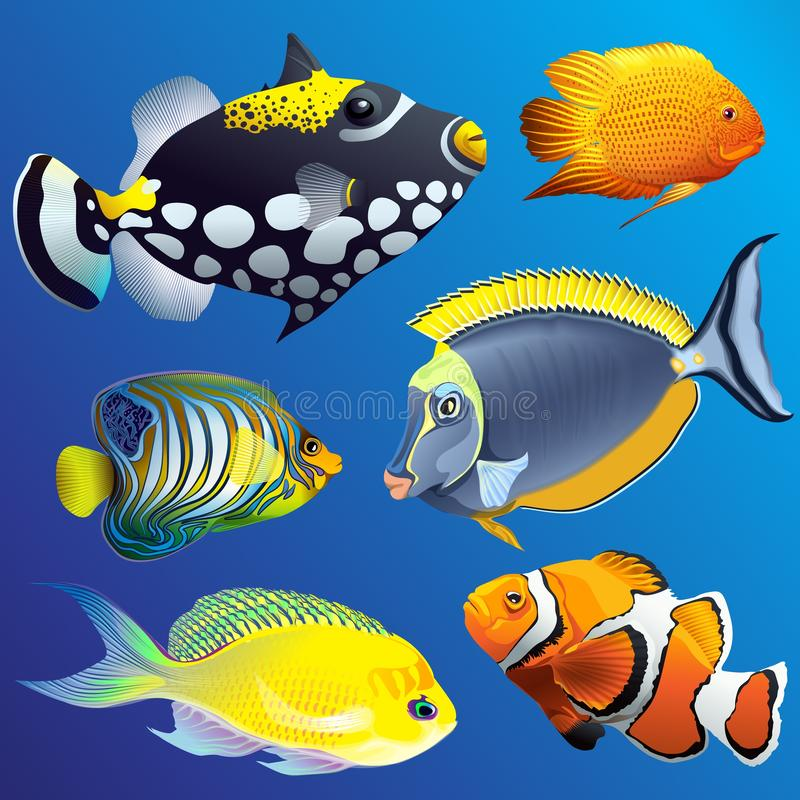 Marine Underwater Fauna Set exotique réaliste illustration stock