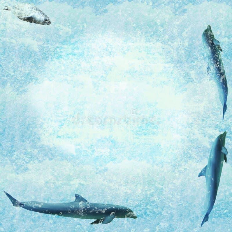 Marine Wildlife Wallpaper Stock Photos
