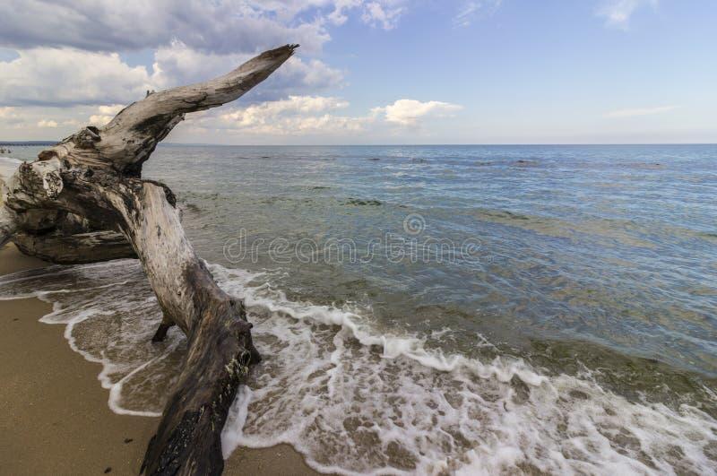 Marinelandschaft mit einem alten gefallenen Baum lizenzfreie stockbilder