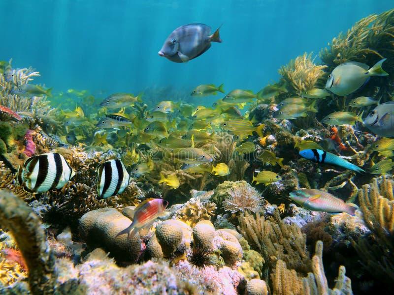 Marinelebensdauer in einem Korallenriff lizenzfreie stockfotografie