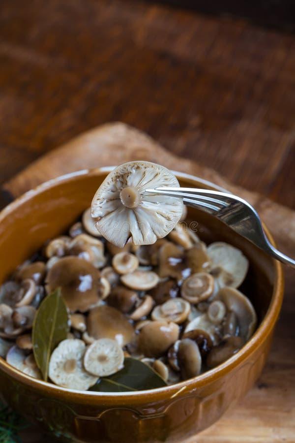 Marinerad honungsvamp i brun bunke på trätabellen royaltyfria foton