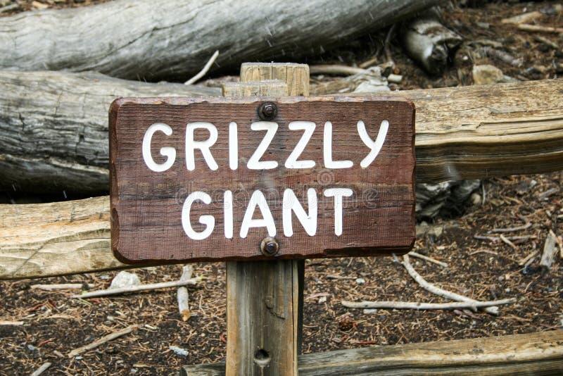 Mariposa树丛北美灰熊巨人 库存照片